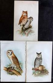 Ridgway, John 1893 Lot of 3 USA Bird Prints. Owls