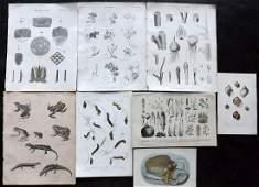 Natural History  Botanical 19th Cent Mixed Lot of 8
