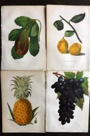 Anderson, James 1874 Lot of 4 Antique Fruit Prints