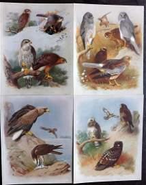 Thorburn, Archibald 1918 Lot 4 Birds of Prey Prints