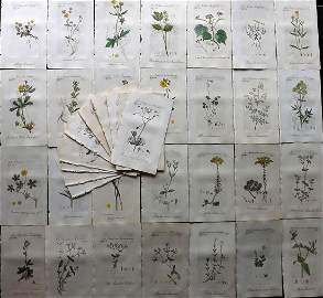 Sowerby, James C1800 Lot of 48 HCol Flowering Plants