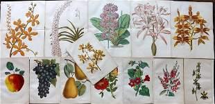 Anderson, James 1874 Lot of 13 Botanical & Fruit Prints