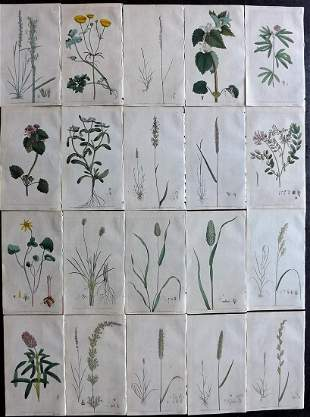 Martyn, Thomas 1792 Lot of 20 Hand Col Botanical Prints