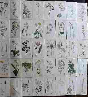 Martyn, Thomas 1792 Lot of 40 Hand Col Botanical Prints
