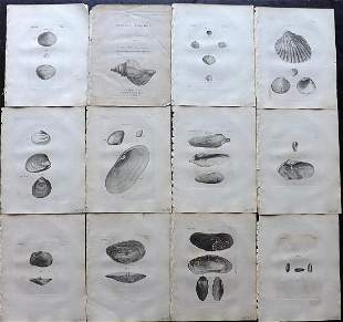 Pennant, Thomas 1776 Lot of 12 Antique Shell Prints