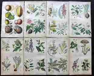 Rhind, William 1857 Lot of 8 Hand Col Botanical Prints