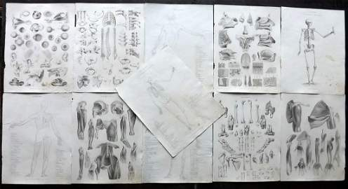 Encyclo. Metropolitana C1830 Lot of 11 Anatomy Prints