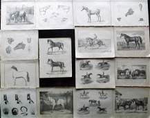 Miles, W. J. C1895 Lot of 15 Horse & Farriery Prints