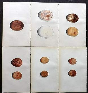 Hewitson, William 1846 Lot of 6 Hand Col Bird Egg