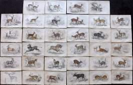 Jardine, William C1840 Lot 34 HC Prints. Deer Antelopes