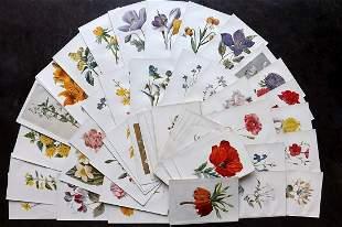 Hulme, Edward C1900 Lot of 80 Botanical Prints