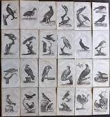 Pennant, Thomas 1812 Lot of 24 Antique Bird Prints