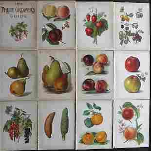 Wright, John 1890's Lot of 12 Fruit Prints. First