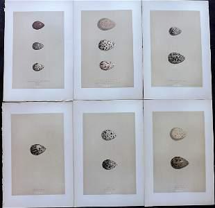 Morris, Francis 1896 Lot of 6 Antique Bird Egg Prints