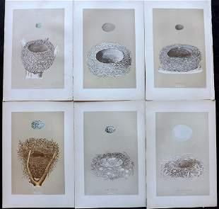 Morris, Francis 1896 Lot of 6 Antique Bird Nest Prints