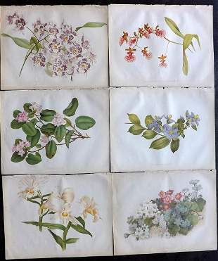 The Garden 1882 Lot of 6 Botanical Prints