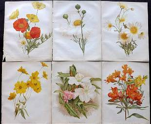 The Garden 1884 Lot of 6 Botanical Prints