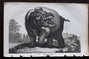 Linnaeus & George Edwards C1800 Print. The Hippo
