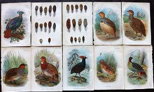 Lloyds's 1897 Lot 10 Game Bird Prints (Library Stamps)