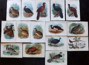 Lloyds's 1897 Lot 15 Game Bird Prints (Library Stamps)