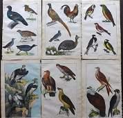 White, Adam 1862 Lot of 6 Hand Col Bird Prints