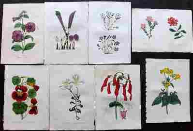 Paxton, Joseph 1834 Lot of 8 HCol Botanical Prints