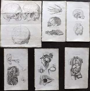 Shaw, Simeon 1823 Lot of 6 Anatomy Prints
