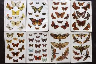 Gordon, W. J. C1900 Lot of 8 Antique Butterfly Prints