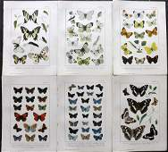 Kirby, William 1895 Lot of 6 Antique Butterfly Prints