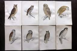 Morris, Francis 1863 Lot of 8 HCol Bird Prints. Owls