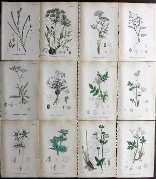 Sowerby, James 1873 Lot of 12 HCol Botanical Prints