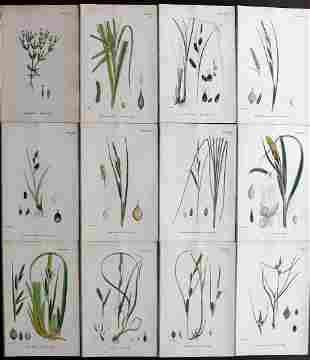 Sowerby, James 1873 Lot of 12 HCol Botanical Prints