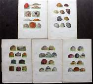 Barrett, Charles 1899 Lot of 5 Hand Col Moth Egg Prints