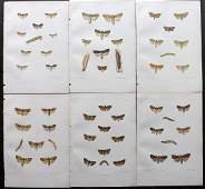 Barrett, Charles 1899 Lot of 6 Hand Col Moth Prints