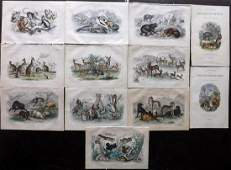 Goldsmith, Oliver 1873 Lot of 12 Hand Col Prints