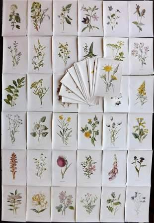 Hulme, Edward C1900 Lot of 50 Botanical Prints