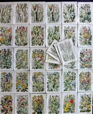 Gordon, W. J. C1900 Lot of 33 Botanical Prints