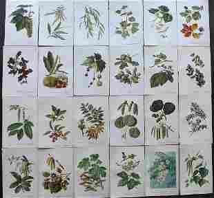 Boulger, George 1888 Lot of 24 Botanical Prints. 1st
