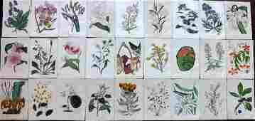 Paxton, Joseph 1834 Lot of 27 HCol Botanical Prints