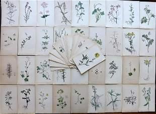 Hogg & Johnson C1870 Lot of 70 HCol Botanical Prints