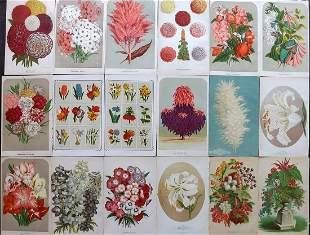 Vick, James 1880's Lot of 18 Botanical Prints