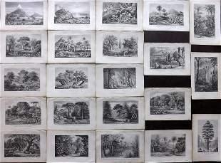 Rhind, William 1868 Lot of 22 Botanical Prints