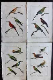 Buffon & Lacepede 1820 Lot of 4 HCol Hummingbirds