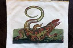 Buffon & Smellie C1821 HC. Surinam Lizard, Maria Merian