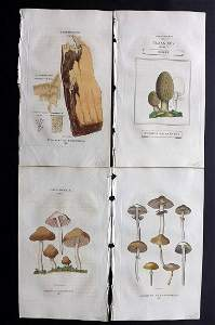 Duppa, Richard 1816 Lot of 4 HCol Mushroom Prints