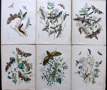 Humphreys & Westwood 1854 Lot of 6 HCol Moth Prints