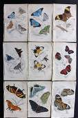 Jardine, William 1837 Lot of 9 HCol. Exotic Butterflies