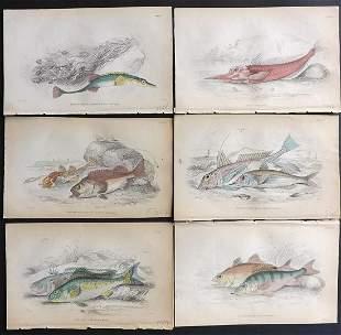 Jardine, William 1885 Lot of 6 Hand Col Fish Prints