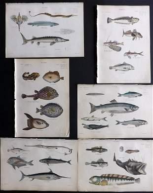 Richardson, John 1862 Lot of 6 Hand Col Fish Prints