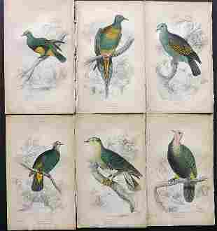 Jardine, William 1885 Lot of 6 HCol Bird Prints Pigeons